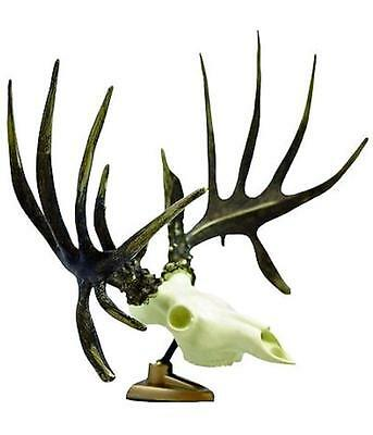 Raxx Big Rack Whitetail Deer Skull Antlers Trophy Mount Base Dashboard Shedz