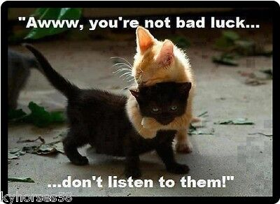 Funny Cat Humor You're Not Bad Luck Refrigerator Magnet