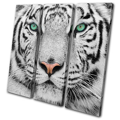 Animals Siberian Tiger Eye TREBLE CANVAS WALL ART Picture Print VA