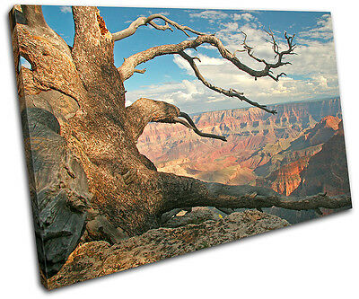 Grand Canyon Tree  Landscapes SINGLE CANVAS WALL ART Picture Print VA