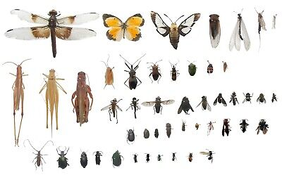 Pinned Mounted Insect Specimens for Entomology Class Bug Collection -Identified!