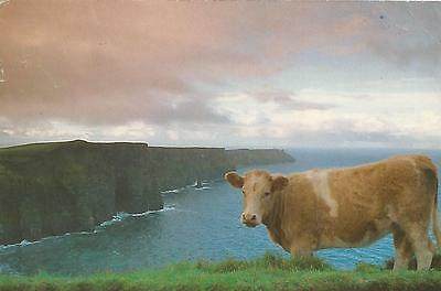 irish postcard ireland clare cliffs of moher