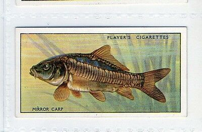 #13 Mirror Carp - Fresh-Water Fishes - 1933/1934 Card