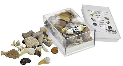 Fossil Box. Assorted Fossils in Acrylic Gift Case