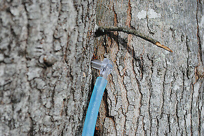 "Clear Maple Sugar Tree Taps -Spiles / Spout 5/16"" + 1' Hose Pick Quantity Needed"