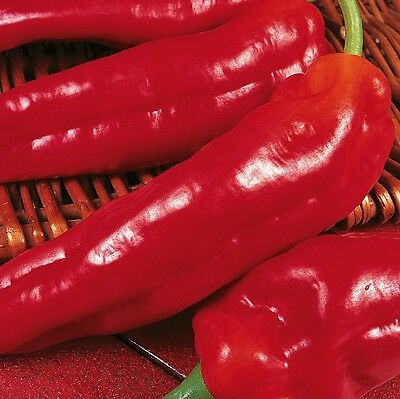 Pepper Sweet - Long Red Marconi - 150 Seeds