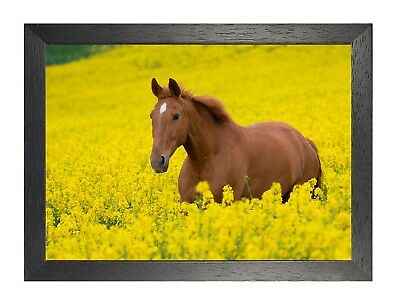 Horse 4 Black Animal Nuture Beautiful Picture Love Poster Field Photo Gallop