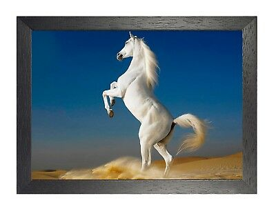 Horse 18 Animal Nuture Beautiful Picture Love Poster Pose Beach Photo Print