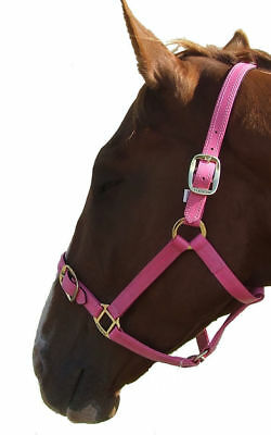PVC Halter/headstall with brass fittings - Pink Full Size Trendco