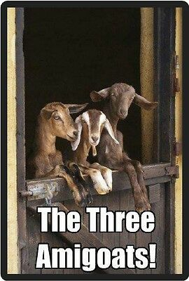 Funny Goat Humor The Three Amigoats Refrigerator Magnet