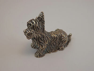 Miniatura Cane Terrier Pelo Lungo In Argento Silver  Miniature Terrier Dog