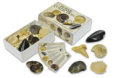 NEW FOSSILS OF THE WORLD 5 Fossil Collection Box Ammonite Nautiloid Shark Tooth