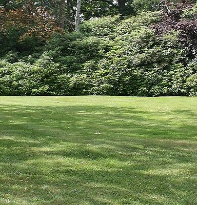 GRASS SEED FOR SHADE, SHADY AND SHADED AREAS 10KG (Defra Reg. 7130)