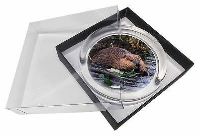 River Beaver Glass Paperweight in Gift Box Christmas Present, ABV-1PW