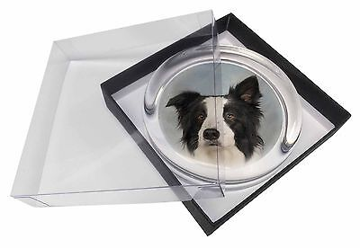 Border Collie Dog Glass Paperweight in Gift Box Christmas Present, AD-BC13PW