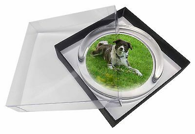 Liver and white Border Collie Dog Glass Paperweight in Gift Box Chris, AD-BC16PW