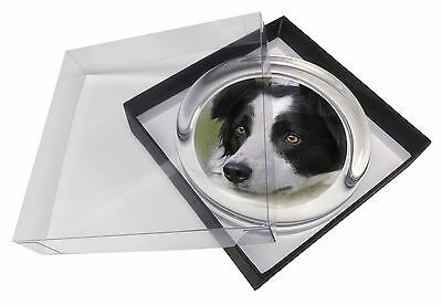 Border Collie Dog Glass Paperweight in Gift Box Christmas Present, AD-BC9PW