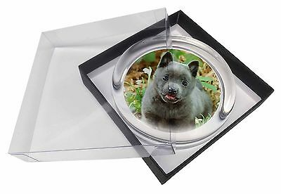 Blue Schipperke Dog Glass Paperweight in Gift Box Christmas Present, AD-BS1PW