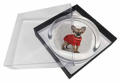 Chihuahua in Dress Glass Paperweight in Gift Box Christmas Present, AD-CH5PW