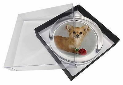 Chihuahua with Red Rose Glass Paperweight in Gift Box Christmas Prese, AD-CH6RPW