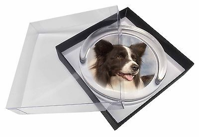 Border Collie Dog Glass Paperweight in Gift Box Christmas Present, AD-CO4PW