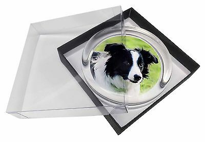 Border Collie Dog Glass Paperweight in Gift Box Christmas Present, AD-CO69PW