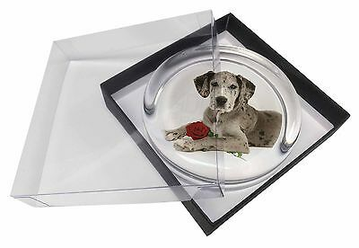 Great Dane with Red Rose Glass Paperweight in Gift Box Christmas Pres, AD-GD2RPW