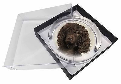 Irish Water Spaniel Dog Glass Paperweight in Gift Box Christmas Presen, AD-IWSPW