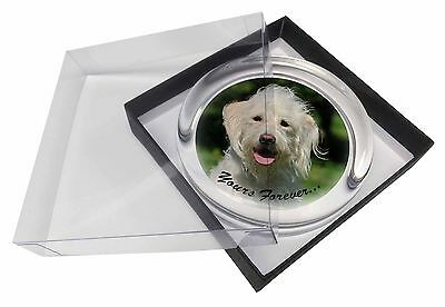 White Labradoodle 'Yours Forever' Glass Paperweight in Gift Box Chris, AD-LD3yPW