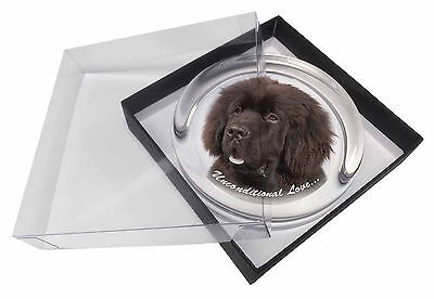 Newfoundland Dog-With Love Glass Paperweight in Gift Box Christmas Pr, AD-NF1uPW