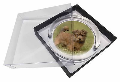 Norfolk Terrier Dog Glass Paperweight in Gift Box Christmas Present, AD-NT1PW