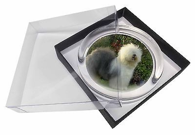 Old English Sheepdog Glass Paperweight in Gift Box Christmas Present, AD-OES1PW
