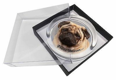 Fawn Pug Dog 'Yours Forever' Glass Paperweight in Gift Box Christmas P, AD-P1yPW