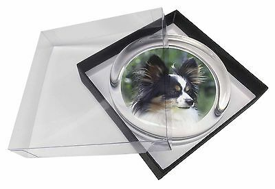 Papillon Dog Glass Paperweight in Gift Box Christmas Present, AD-PA62PW