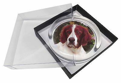 English Setter Dog Glass Paperweight in Gift Box Christmas Present, AD-RWS1PW