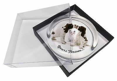 Dogs and Cat 'Yours Forever' Glass Paperweight in Gift Box Christmas , AD-SC57PW