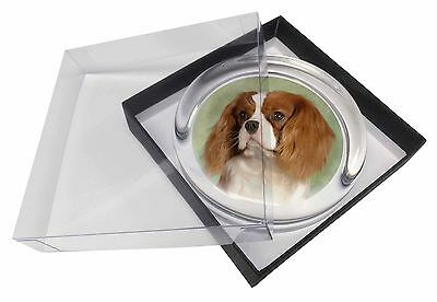 Blenheim King Charles Spaniel Glass Paperweight in Gift Box Christmas, AD-SKC7PW