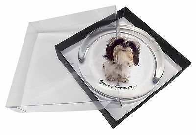 Shih Tzu Dog-Love Glass Paperweight in Gift Box Christmas Present, AD-SZ8PW