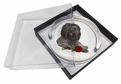 Tibetan Terrier with Red Rose Glass Paperweight in Gift Box Christmas, AD-TT2RPW