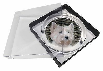 West Highland Terrier Dog Glass Paperweight in Gift Box Christmas Pres, AD-W33PW