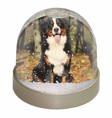 Bernese Mountain Dog Photo Snow Dome Waterball Stocking Filler Gift, AD-BER7GL