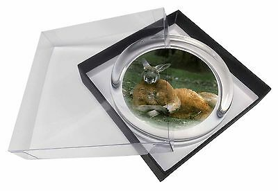 Cheeky Kangaroo Glass Paperweight in Gift Box Christmas Present, AK-1PW