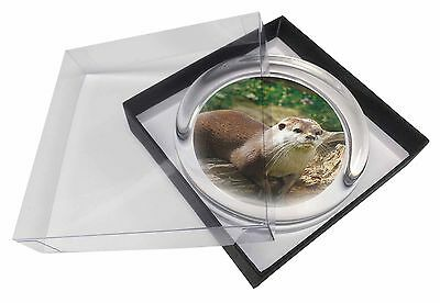 River Otter Glass Paperweight in Gift Box Christmas Present, AO-2PW