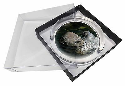 Floating Otter Glass Paperweight in Gift Box Christmas Present, AO-3PW