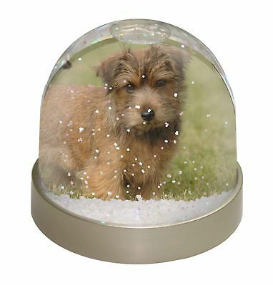 Norfolk Terrier Dog Photo Snow Dome Waterball Stocking Filler Gift, AD-NT1GL