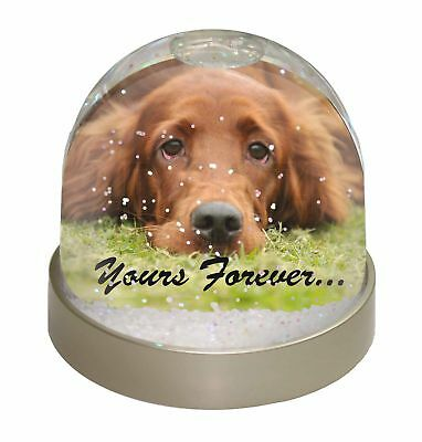 Red Setter Dog 'Yours Forever' Photo Snow Dome Waterball Stocking Fil, AD-RS2yGL
