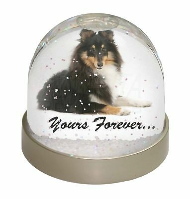 Shetland Sheepdog 'Yours Forever' Photo Snow Dome Waterball Stocking , AD-SE40GL