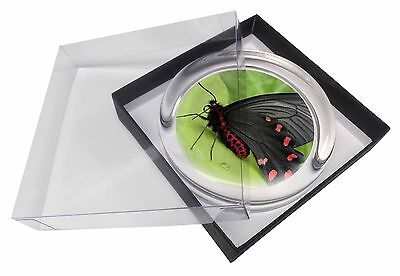 Black and Red Butterflies Glass Paperweight in Gift Box Christmas Prese, IBU-3PW
