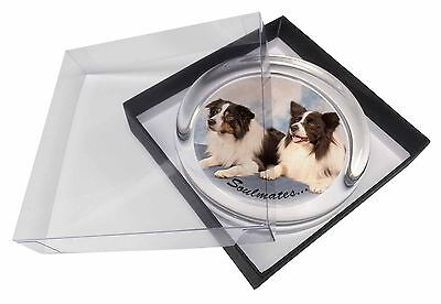 Border Collie Dogs 'Soulmates' Glass Paperweight in Gift Box Christma, SOUL-26PW