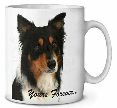 "Tri-colour Border Collie Dog ""Yours Forever..."" Coffee/Tea Mug Chris, AD-CO33yMG"